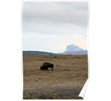 Bison and Chief Mountain Poster