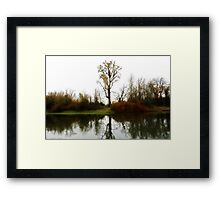 Nations Largest CottonWood Tree Framed Print
