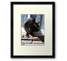 Kirby on the prowl Framed Print