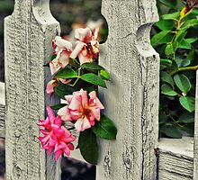 Flowers Poking Through the Fence by Susan Russell