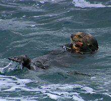 Lunch Break - Monterey Bay, California by Shane Rechner