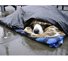 Dumper (street seller's dog) Photographic Print