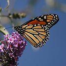 Butterfly Landing by riverangel51