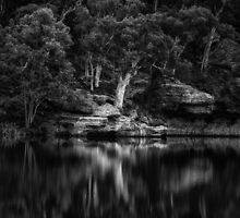 Dunns Swamp #1 - The HDR Experience - A Study In Black and White by Philip Johnson