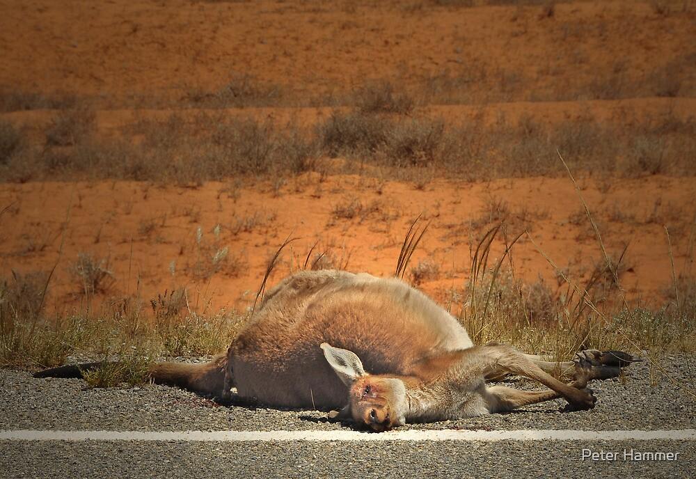 Roadkill by Peter Hammer