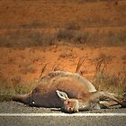 Roadkill by Peter Hammer