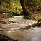 Country Creek - Moina, Tasmania by Liam Byrne