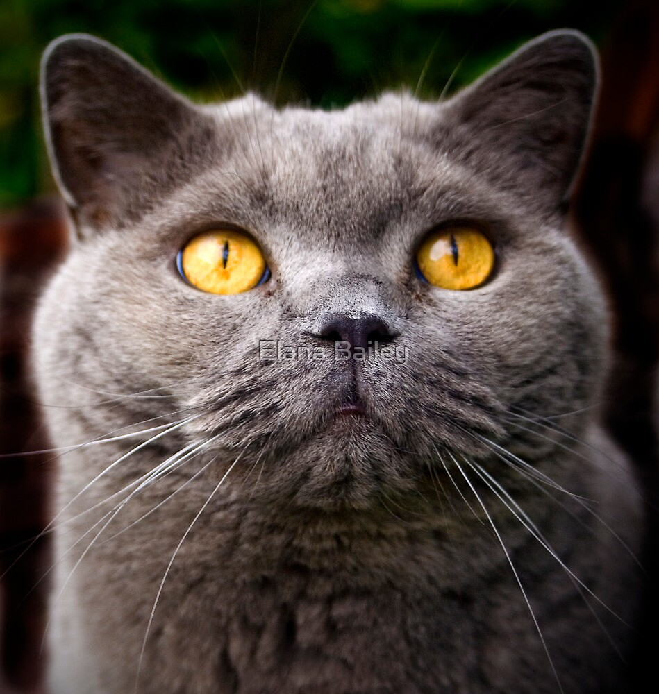 Yellow eyes, White whiskers by Elana Bailey