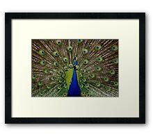The Peacock Framed Print