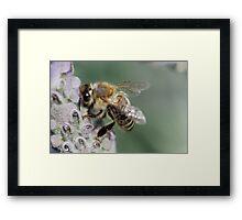 Macro Bee Framed Print