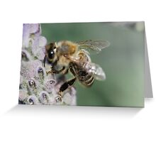 Macro Bee Greeting Card