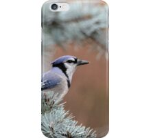 Haughty Blue Jay iPhone Case/Skin