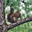 Squirrel magic, Edmonton, Alberta, Canada by Adrian Paul