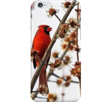 Northern Red Cardinal iPhone Case/Skin