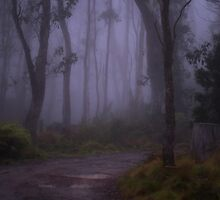 Into The Mist - Barrington Tops - The HDR Experience by Philip Johnson