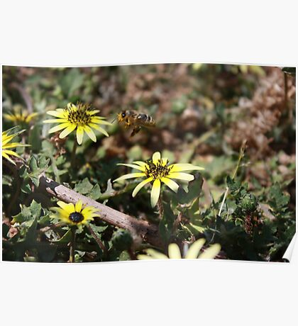 Busy Bee in Flight  Poster