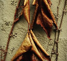 Bat Leaves by sephoto