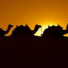 Synchronized Camels by Mukesh Srivastava