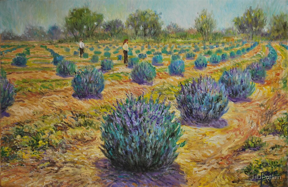Study for Lavender Farm by HDPotwin