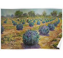 Study for Lavender Farm Poster