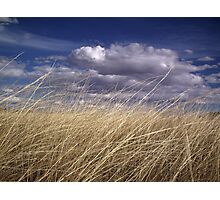 wind in the grass 2 Photographic Print
