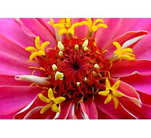 Macro Flower Photographic Print
