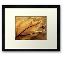 Rusted from the Rain II Framed Print