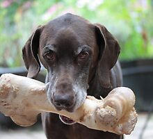 German Shorthaired Pointer with giant bone by portosabbia