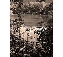 The mangrove swamp, Queensland Photographic Print