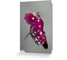 Purple pansy Greeting Card
