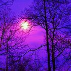 purple night skies by ANNABEL   S. ALENTON