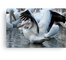 Flapping Pelican Canvas Print