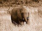 Elephantine by inglesina
