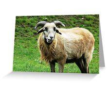 sheepish Greeting Card
