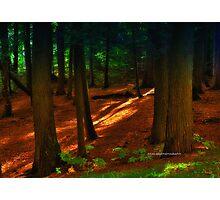 New Yorks Adirondack region XIX  Photographic Print