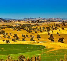 The turf farm at Cowra by Geoffrey Thomas