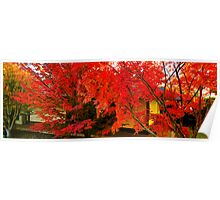 Autumn leaves at the Japanese Garden - Cowra Poster