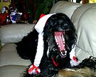 AARRAGHH!!! ........IT'S CHRISTMAS!! by oulgundog