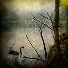 Swan on Nepean River by Manfred Belau