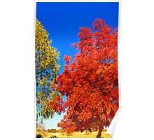 Autumn in rural New South Wales  Poster
