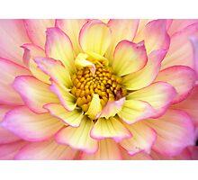 Dragon Flower Photographic Print
