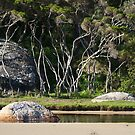 Tidal River, Wilsons Promontory, Victoria. by johnrf