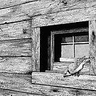 Vantage Point by Mike Wytinck