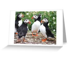 Puffin party, Farne Islands Northumberland Greeting Card