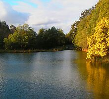 Emerald Park Lake late Afternoon, Dandenong Ranges Victoria by Virginia McGowan