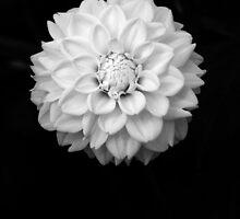 B&W Flower #1 by Sam Davis