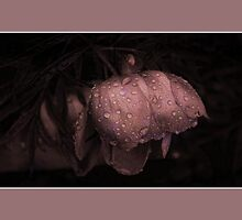 Raindrops On Japanese Peony  by Vickie Emms