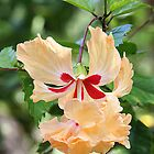 Beautiful Tropical Flower by JaneLoughney