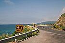 Great Ocean Road - Wye River Bend by mspfoto