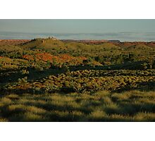 Spinifex and termite mounds... Photographic Print